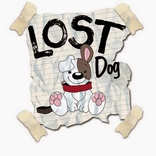 What to do if your dog is lost?