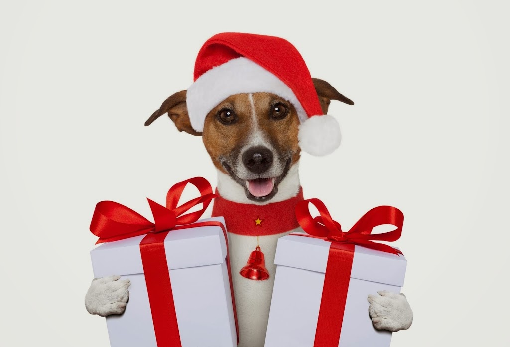 Top tips for surviving Christmas with your dog