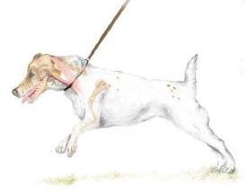 dog choke on lead