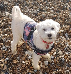 Testimonial Poodle Hove BN3 Sussex
