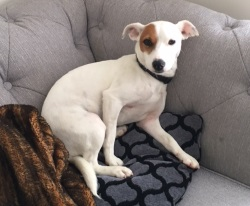 Testimonial Jack Russell Terrier Hove BN3 Sussex