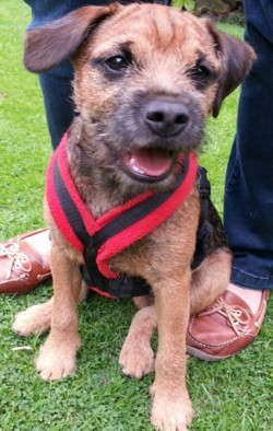 Testimonial Border Terrier training Brighton BN1 Sussex