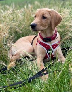 Testimonial labrador Terrier BN3 Hove