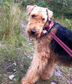 Testimonial Airedale Terrier Dog training Brighton