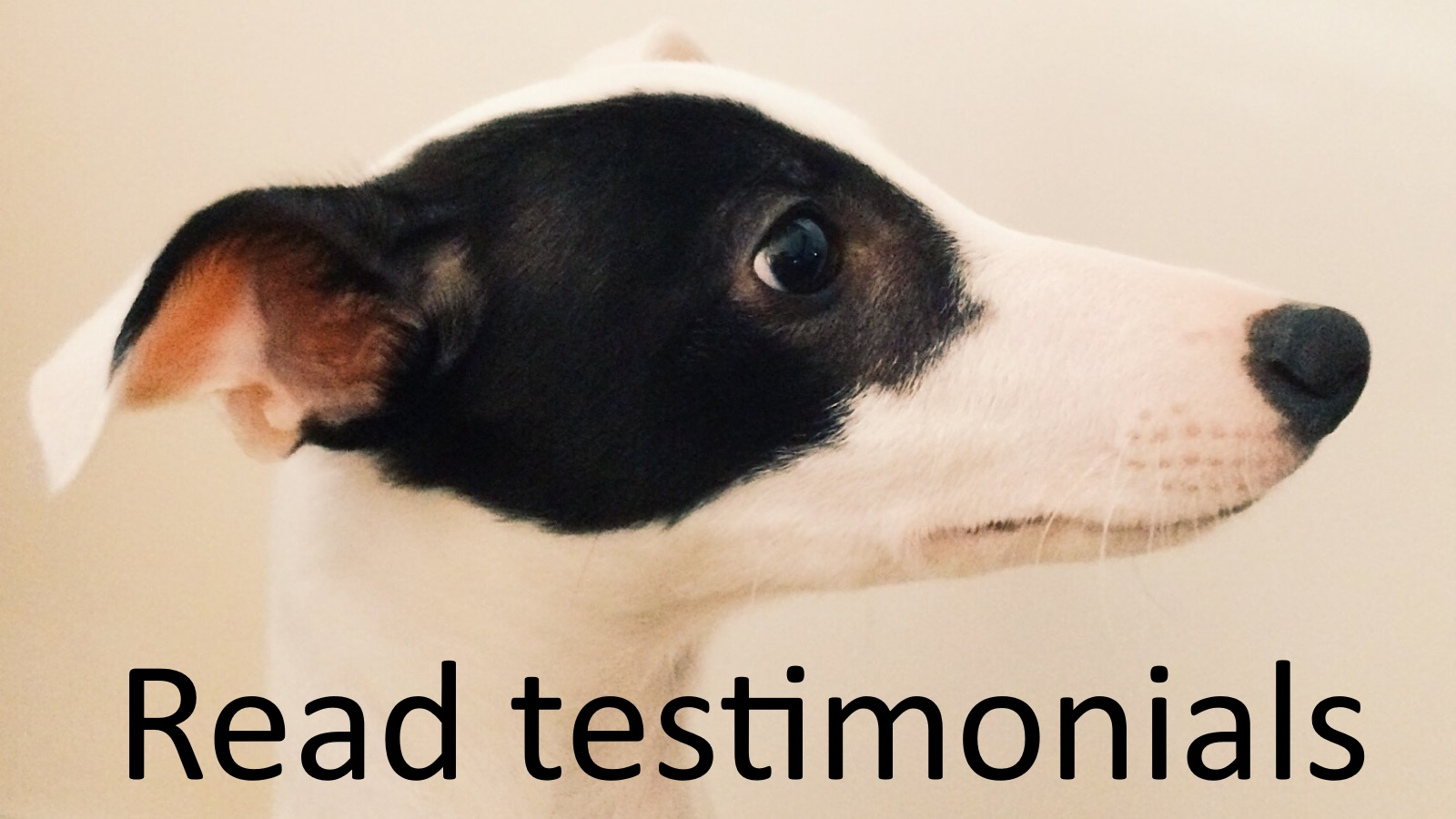Whippett Testimonial Dog Training Brighton Hove