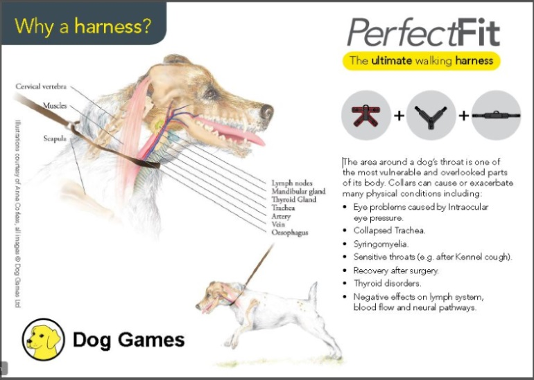 Shop Perfect Fit Harness Rainbow Dogs Brighton Sussex