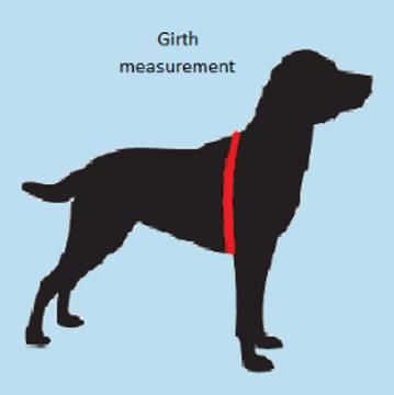 Shop Dog Training Behaviour Rainbow Dogs Brighton Hove