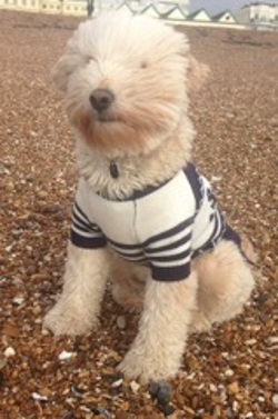 Testimonial Tibetan Terrier Hove BN3 Sussex